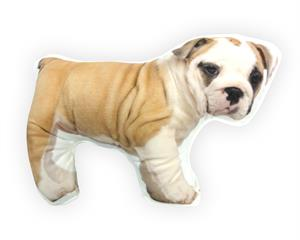 English Bulldog Brown