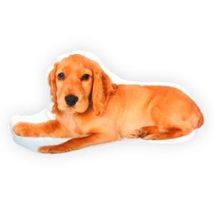 English Cocker Spaniel Orange