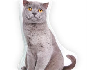 British Shorthaired Cat Grey
