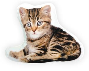 Bengal Kitten Brown